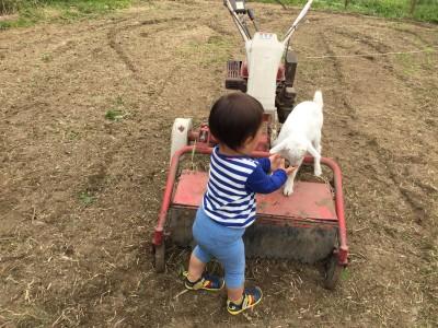 子ヤギと仲良く遊ぶ息子の晴太